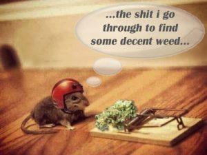 Decent weed - Weedmemes.com
