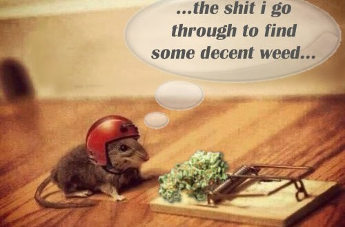 Find Decent Weed…Stoner Mouse Says Legalize Weed