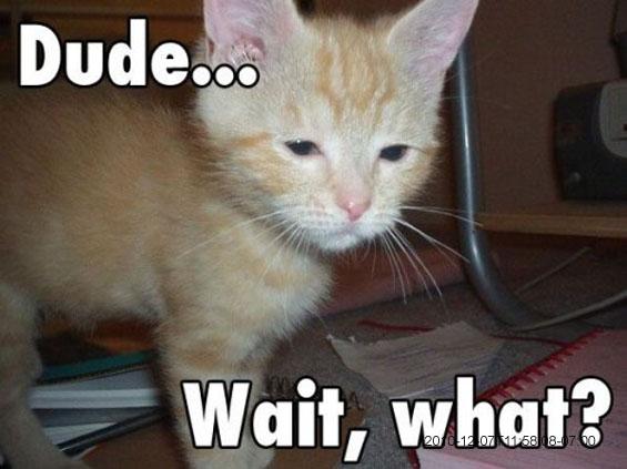 high cat 1 marijuana dude wait, what? weed memes,Wait What Meme