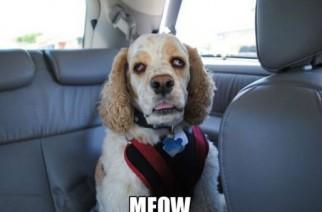 Stoned Doggie – Says Meow Stoner Dog Weed Memes