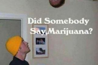 Somebody say marijuana?