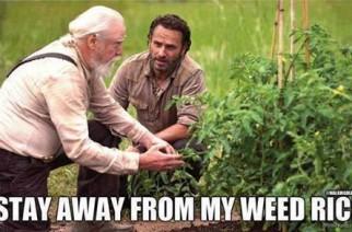 Walking Dead Spoof Weed memes