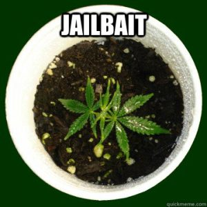 cannabis seedling jailbait weed meme