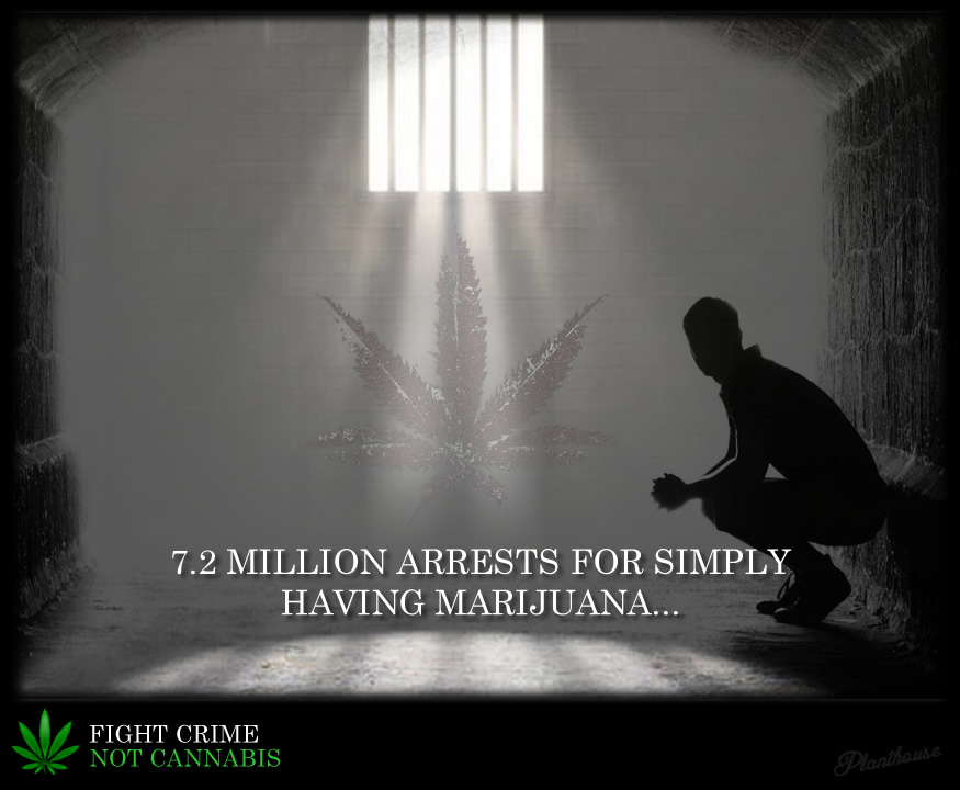 Fight Crime Not Cannabis