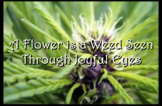 A Flower is a Weed Seen Through Joyful Eyes