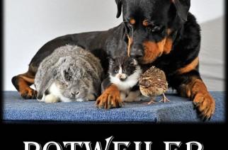 Potweiler Stoner Dog Meme