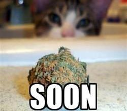Soon Cat Weed Meme