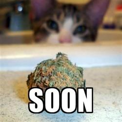 Soon Cat Weed Meme