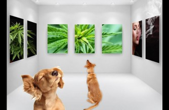 Stoner Dogs Night at the Museum Weed Memes