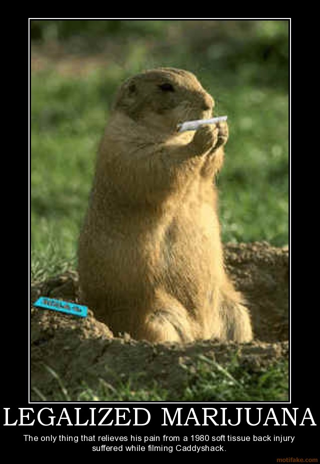 Caddy Shack Gopher Weed Memes Legalize Cannabis