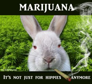 Rabbits get high