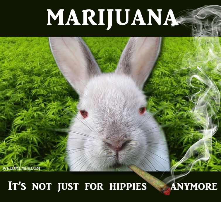 Stoner Bunny Says Weed…not just for hippies anymore.