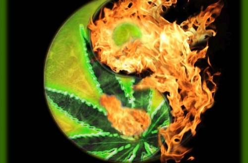 Weed & Fire Weed Memes