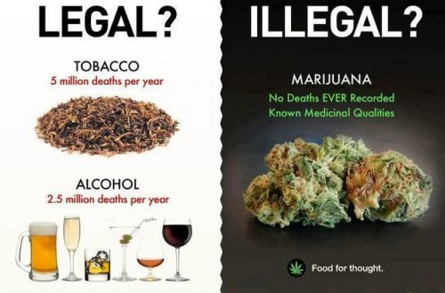 Food for thought Weed Memes