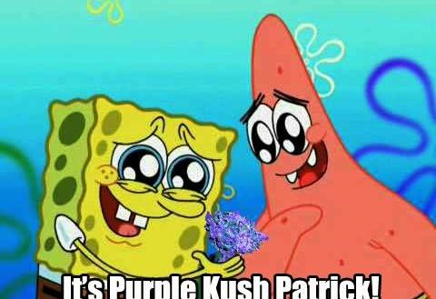 It's Purple Kush Patrick! Spongebob weed meme