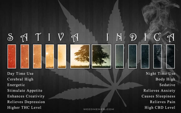 how to tell indica vs sativa