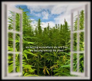 Free the plant marijuana memes