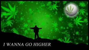 Go Higher Summer Nights 2015