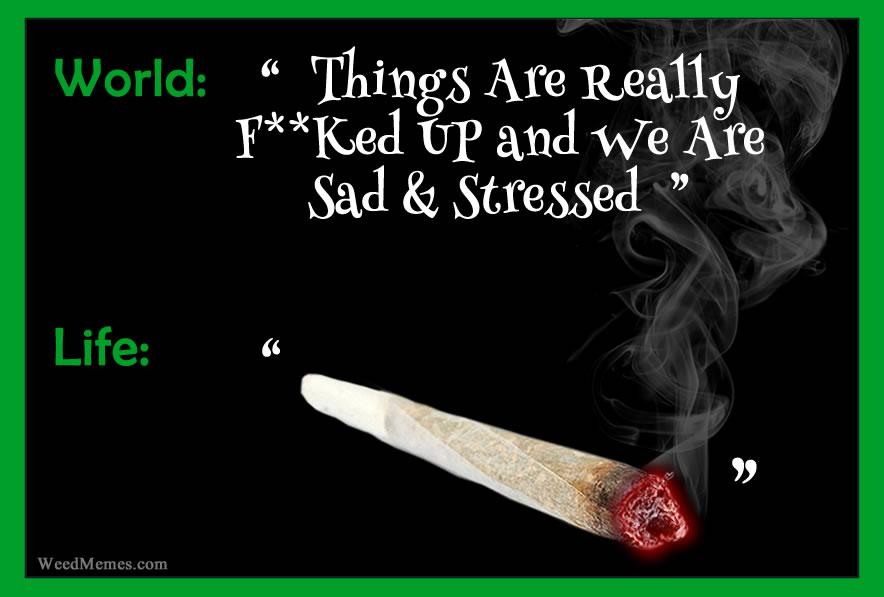 Life & Weed Memes