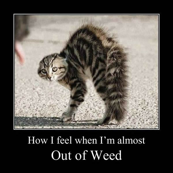 Stoner Cat Out of Weed Memes