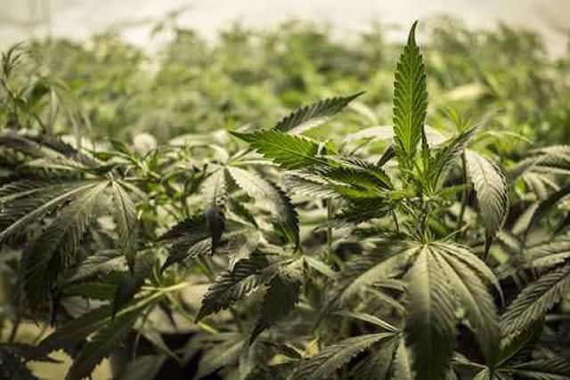 Top Ten Marijuana Quotes
