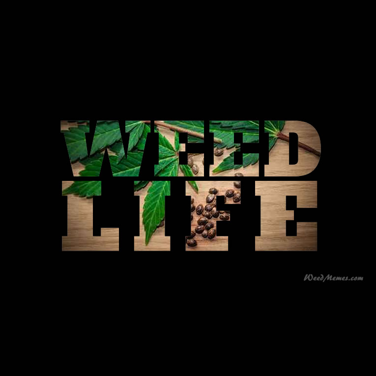 Weed LIfe Stoner Quotes