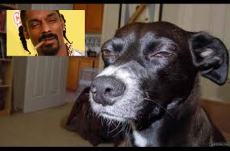 High AF Snoop Dogg Meme