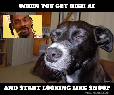 High AF Snoop Dogg Meme