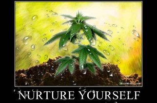 Nurture Yourself Grow & Smoke Weed – Marijuana Memes
