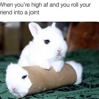 Stoner Rabbit High AF Roll Friend Into Joint Weed Memes
