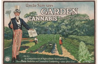 Uncle Sam Garden Cannabis Marijuana Meme