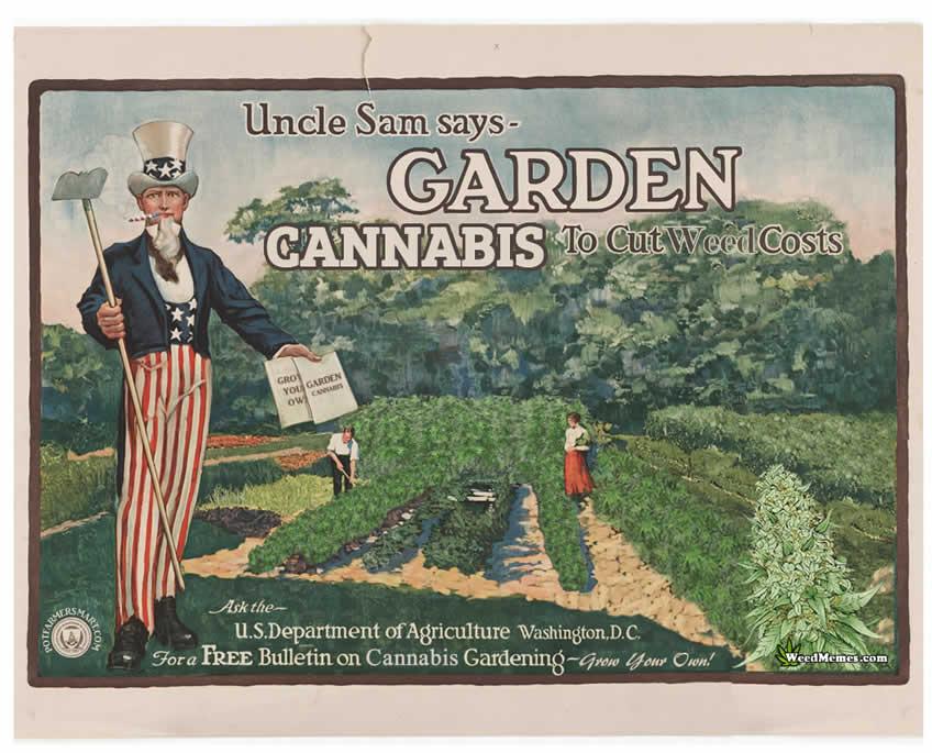 Uncle Sam Weed Memes