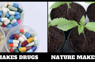 Cannabis Is A Plant Not A Drug Weed Memes