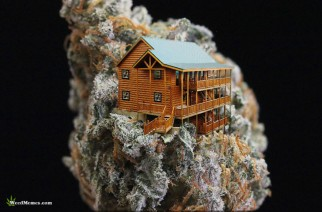Cabin In The Weed Pic – Weed Memes