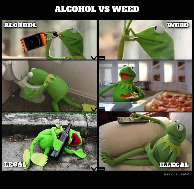 Kermit Shows Alcohol Vs Marijuana Weed Memes
