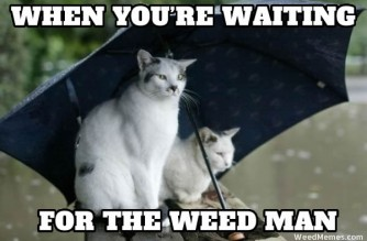 Waiting For Weed Man Memes Stoner Cats Weed Memes