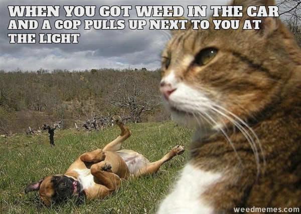 Funny Meme For Cops : Weed in car stoner cat next to cops funny marijuana memes