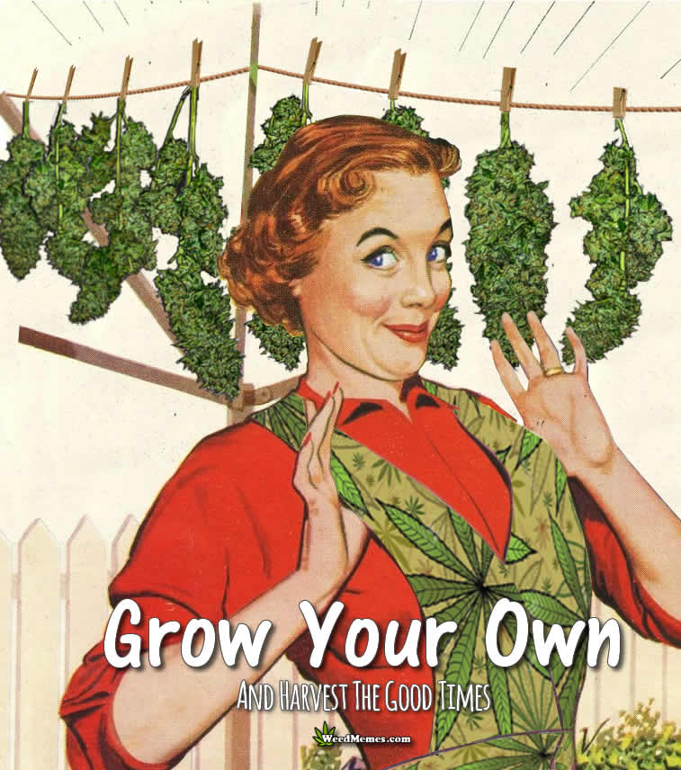 Grow Your Own Harvest Good Times Weed Memes