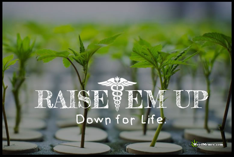 raiseem up down for life grow cannabis weed memes