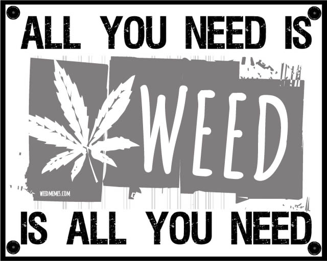 All You Need Is Weed Is All You Need Weed Quotes