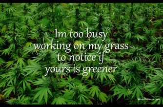 Busy Working On My Grass To Notice If Yours Greener Marijuana Quote