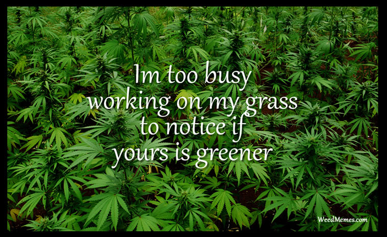 Busy working grass weed quotes