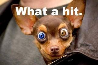 Stoner chihuahua funny weed memes