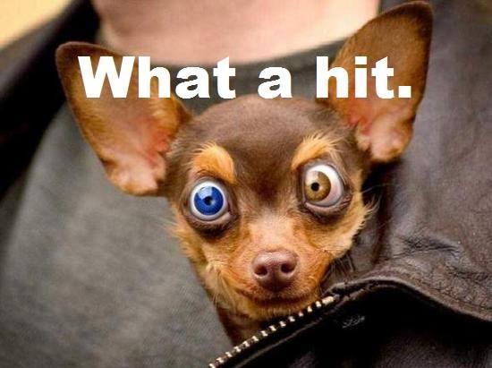 Stoner Chihuahua What A Bong Hit Pet Funny Weed Memes
