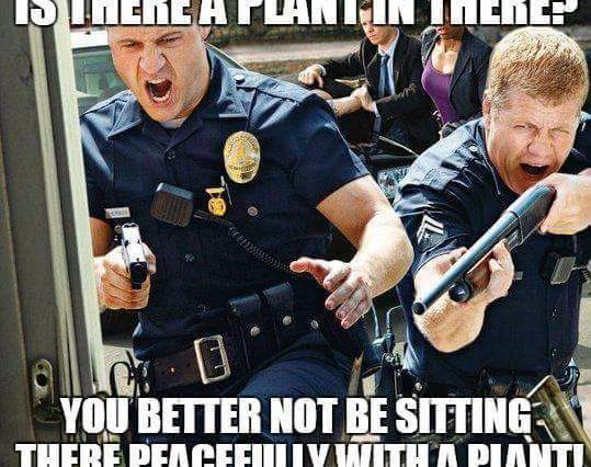 Funny Police Officer Meme : Funny cop marijuana memes weed memes