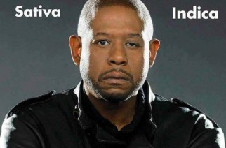 Forest Whitaker Sativa Indica Faces of Marijuana Weed Memes