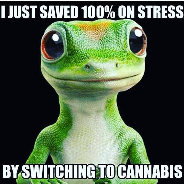 Geico Saved Quote: Geico Gekko Spoof Switched To Cannabis Weed Memes