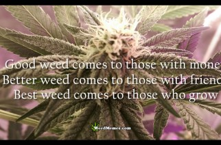 Good Better Best Weed Quote