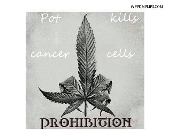 Pot Kills Cancer F**k Prohibition Marijuana Memes