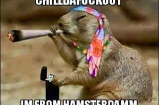 Stoned Hamster from Hamsterdam Animal Weed Memes